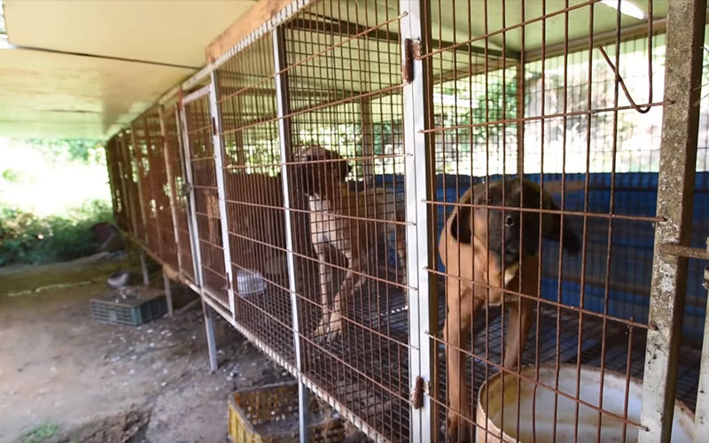 強制關閉南韓殘忍狗肉屠宰場,救出103隻「前待宰小狗」美國找新家